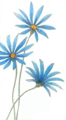 File:Blue daisy.png