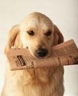 File:DogPaper.jpg