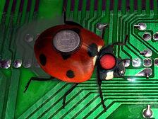 Repair bug.jpg