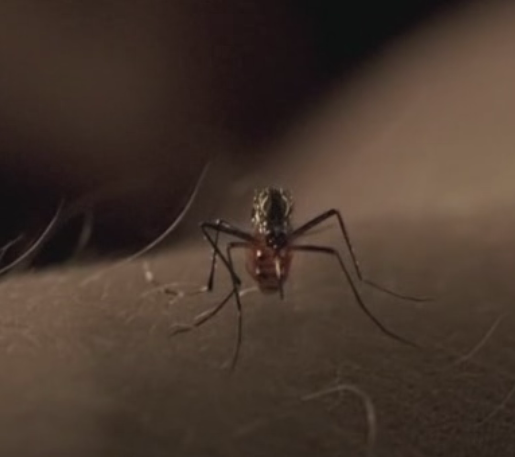 File:TheMosquito.png