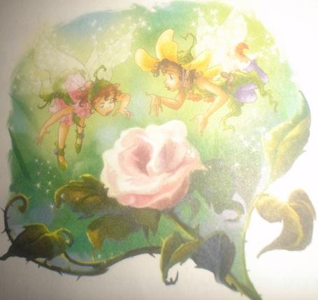 File:Fairy Pink rosebush.jpg