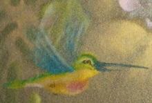 Birdie Profile