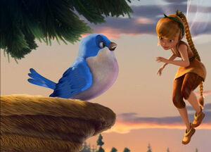 Fawn bluebird