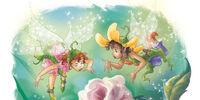Fairy Pink rosebush