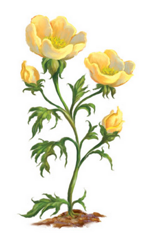 File:Buttercups-0.png