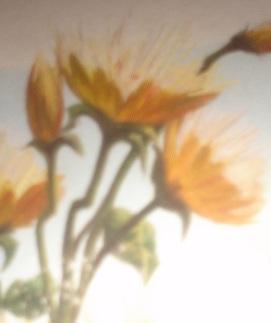 File:Chrysanthe-poppies.JPG