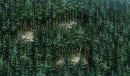 Daukernforest