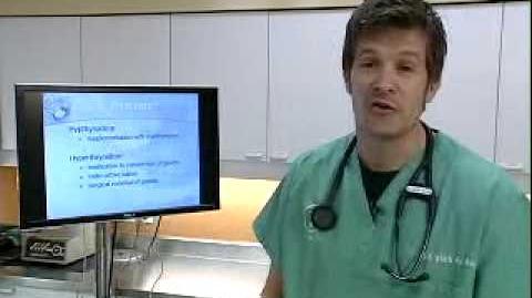 Pet Health - Thyroid Disease - by Dr. Mark A. de Wolde