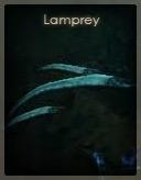 Lamprey.
