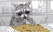 Movie Raccoon