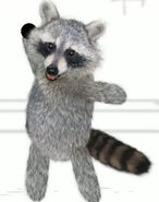 Raccoon 6
