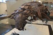 Edmontonia American Museum of Natural History