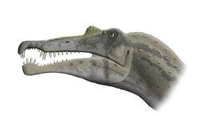 Spinosaurus skull steveoc