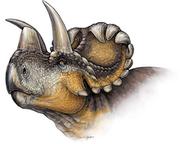 Wendiceratops restoration