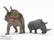 Triceratops and rhino 1024