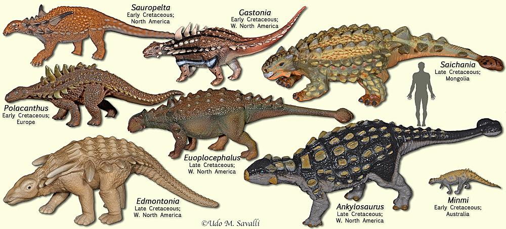 Category:Ankylosaurians | Dinosaur Wiki | FANDOM powered ...