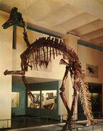 Corythosaurus-skeleton-postcard-785x1000