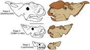 Pachyrhinosaurus ontogeny