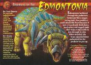 Edmontonia front