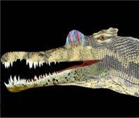 Spinosaurio terminado