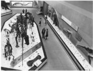 NMNH fossil halls, circa 1963 1