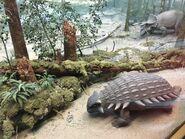 Royal Alberta museum Ankylosaurus