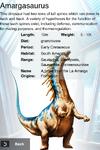 Album Rare Amargasaurus