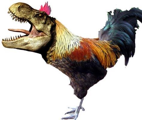 File:Chicken-TRex.jpg