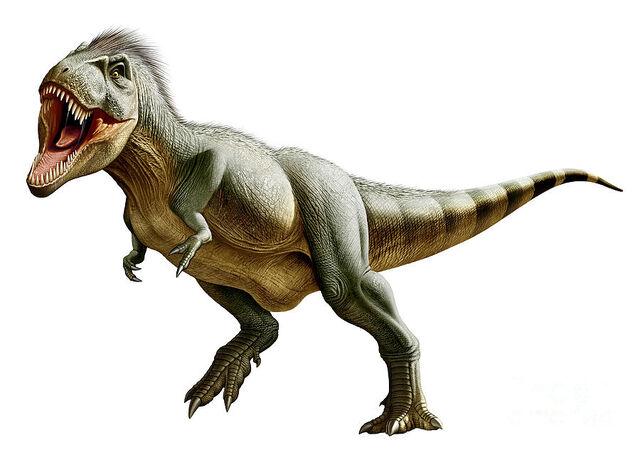 File:Tyrannosaurus-rex-a-genus-mohamad-haghani.jpg