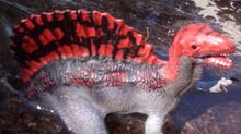Redsail