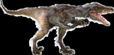 Velicoraptor-Dinosaur 3