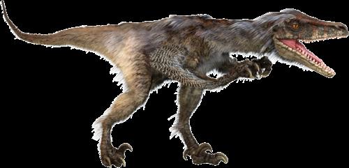 File:Velicoraptor-Dinosaur 3.png