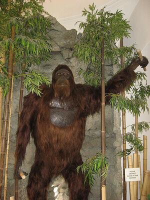 Gigantopithecus, Museum of Man, San Diego