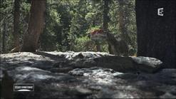 Monopholosaurus