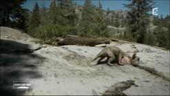 Gorgonops kills