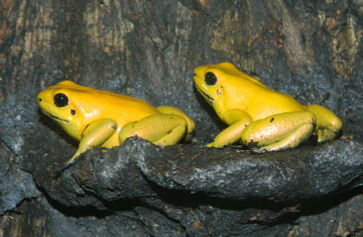 File:Adults on Ledge.png