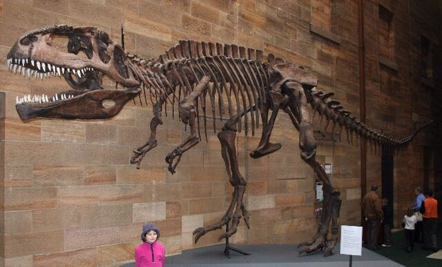 File:Giganotosaurus Skeleton.jpg