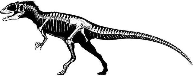 File:Carcharodontosaurus skeleton.jpg