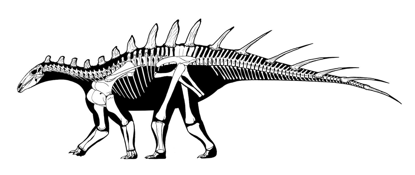 dacentrurus armatus skeletonpng