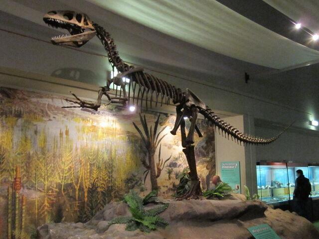 File:Megalosaurus, World Museum Liverpool.jpg