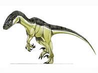 Variraptor