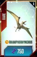 Rhamphorhynchus (1)