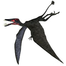 Dorygnathus-pterosaur-on-white-corey-ford