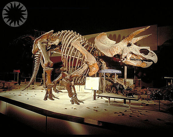 File:Triceratops 1963.jpg