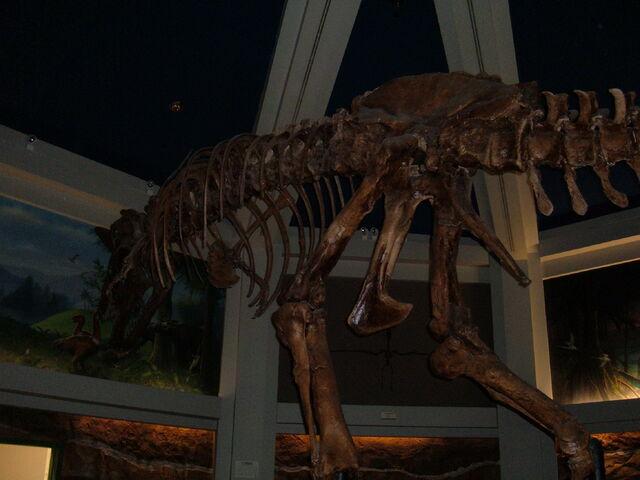 File:Replica Carnotaurus skeleton, DINOSAUR 2.jpg