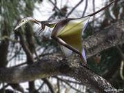 Sharovipteryx sol