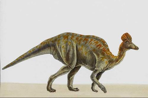 File:Corythosaurus070 e50a.jpg