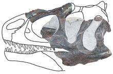 Allosaurus europaeus-0