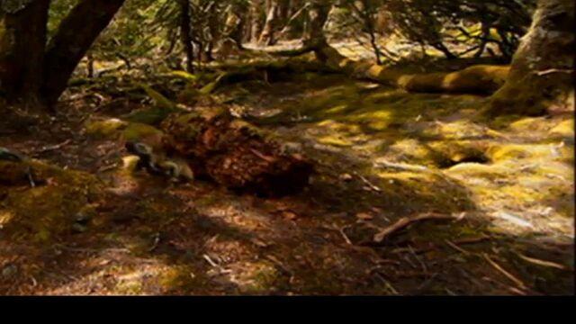File:Traversodon When Dinosaurs Roamed America.jpg
