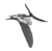 Pteranodon longiceps mmartyniuk wiki